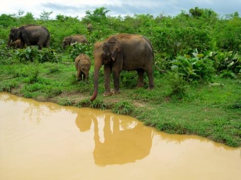 SriLanka015